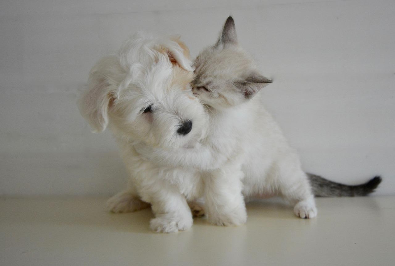 Wie Hund und Katz – oder doch Freunde für's Leben?