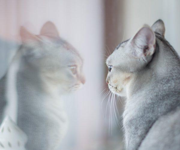 Zeigt meine Katze eine Verhaltensauffälligkeit oder gar eine Verhaltensstörung?